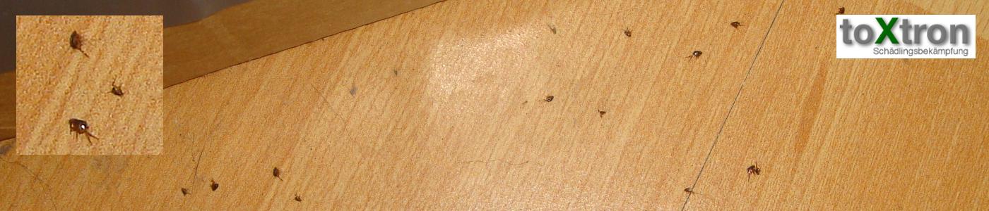 katzen- hunde-floehe-bekämpfen-toxtron
