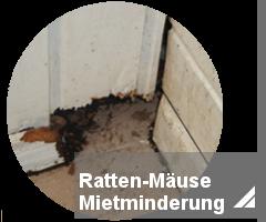 mietminderung-ratten-oder-maeuse