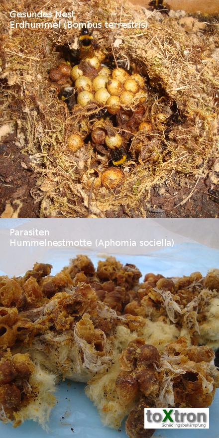 hummel-schäedlinge-wachsmotten-toxtron